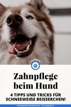 Anzeige. Damit deinem Hündchen das Zähneputzen leichter fällt, habe ich nützliche Tipps für eine besonders wirksame Zahnpflege für Hunde am Blog gesammelt. www.thepawsometyroleans.com Husky, Dogs, Animals, Healthy Teeth, Dental Health, Vet Office, Animales, Animaux, Pet Dogs