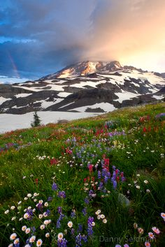 """natureac: """" This blog will make you feel at peace """""""