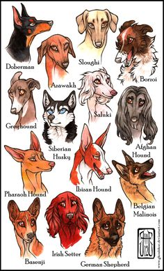 My favorite dog breeds by CanisAlbus on DeviantArt.Variety of dogs to practice drawing! Cute Animal Drawings, Animal Sketches, Cute Drawings, Drawings Of Dogs, Animal Design, Dog Design, Anime Animals, Cute Animals, Mythical Creatures Art