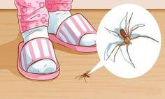 Ezért ne öld meg soha a lakásban a pókot! Natural Spider Repellant, Get Rid Of Spiders, House Spider, Cleaning Hacks, Diy And Crafts, Life Hacks, Creative, Remedies, Easy