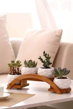Each planter pot features a rippling textured exterior. Perfect for holding potted plants, succulents cacti, herbs and aloe veras. Suitable for both indoor and outdoor décor.The Nuiances of Herb Garden Racks ApartmentSucculents on bridge shelf (Coff Cactus Plant Pots, Potted Plants, Garden Plants, Succulent Pots, Mini Cactus Garden, Plants Indoor, Green Garden, House Plants Decor, Plant Decor