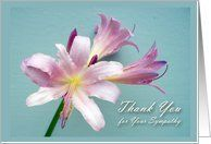 Thank You for Sympathy, Resurrection Lily Flower Card by Greeting Card Universe. $3.00. 5 x 7 inch premium quality folded paper greeting card. Flowers & Garden greeting cards & photo cards are available at Greeting Card Universe. Show your loved ones you care with a custom paper card to make the occasion memorable. Turn to Greeting Card Universe for all your Flowers & Garden card needs. This paper card includes the following themes: thank you, thanks, and sympathy. Greetin...