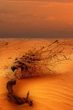 Orange Desert by Saud Alrshiad