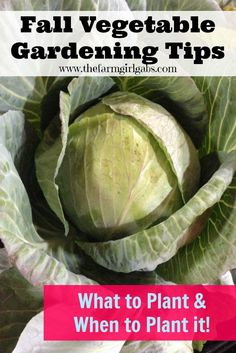 Fall Vegetable Gardening Tips from How Does Your Garden Grow? ~ www.thefarmgirlgabs.com