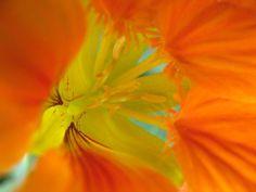 Orange Fan - Macro Flower Photograph via Etsy