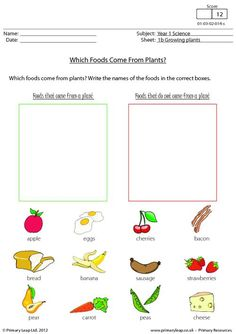 ... on Pinterest | Primary Resources, Science Worksheets and Worksheets