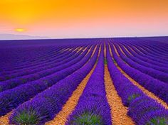 Lavender field at sunset - by Tomáš Vocelka (Plateau de Valensole, Provence. Belle Image Nature, Beautiful World, Beautiful Places, Beautiful Sunset, Cool Pictures, Beautiful Pictures, Valensole, Orange Sky, Amazing Sunsets