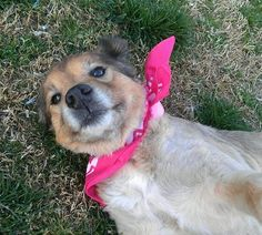 Senior dogs like these below provide so much love, joy, and loyalty and companionship to their humans. These dogs still have so much life in them, life that is all to often cut short in the shelter world due to their advanced age.  Visit our website for more info www.elderpawsrescue.org