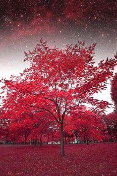 Μυστικιστική νύχτα, Φύση, Ταπετσαρίες Τοίχου
