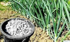 Planters, Gardens, Plant, Window Boxes, Pot Holders, Flower Planters, Pots