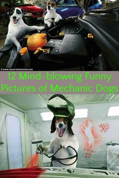 12 Mind-blowing Funny Pictures of Mechanic Dogs - Wackyy Funny Animal Pictures, Funny Animals, Funny Dogs, Funny Memes, Mechanic Humor, Life Memes, Mind Blown, Weird, Mindfulness