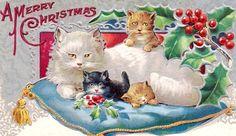 gatinhos, angorá e trê filhotinhos em almofada acetinada, rainha e príncipes.