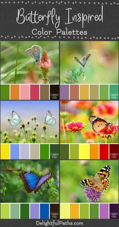 Beautiful butterfly inspired color palettes from images of flowers and butterflies. These color schemes are bright and cheery. Color Scheme Design, Color Schemes Colour Palettes, Paint Color Schemes, Colour Pallette, Color Combos, Paint Colors, Bright Color Schemes, Good Color Combinations, Color Blending