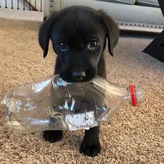 Watch funny and cute dogs and puppies as they are the most lovable pets in the world. Super Cute Puppies, Baby Animals Super Cute, Cute Baby Dogs, Cute Little Puppies, Cute Dogs And Puppies, Cute Little Animals, Cute Funny Animals, Doggies, Cute Animals Puppies