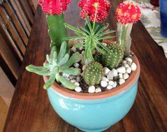 Turquoise succulent arrangement