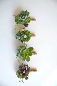 Double Succulent Boutonniere Sets by Eucca on Etsy Green Wedding, Floral Wedding, Wedding Bouquets, Our Wedding, Wedding Flowers, Summer Wedding, Wedding Ideas, Bouquet Succulent, Succulent Boutonniere