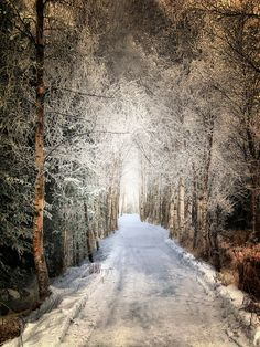 ~~Wooded Walk in Winter | Sitka Park, Anchorage, Alaska by Douglas Brown~~