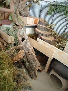 DIY Cool Hamster Haus, Großartig DIY Cool Hamster Haus, Großartig DIY Cool Hamster Haus, Hamster naturescape, Make your guinea pig homes. Cool Hamster Cages, Diy Hamster Toys, Gerbil Cages, Hamster Care, Hamster Stuff, Hedgehog Habitat, Hamster Habitat, Hamster Natural Habitat, Terrarium Hamster