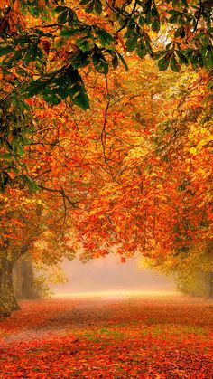 Forest-nature-park-colorful-leaves-iPhone-Wallpaper - IPhone Wallpapers