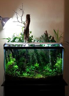 29 gal forest