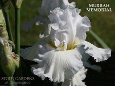 IRIS MURRAH MEMORIAL | Stout Gardens at Dancingtree
