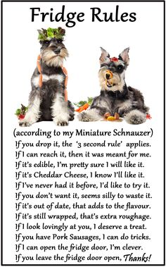 """Miniature Schnauzer - Humorous Magnetic Dog Fridge Rules. Size 6"""" x 4"""". Available from www.car-pets.co.uk and www.Amazon.co.uk"""
