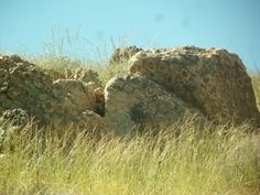 Orbicular Granite/Feldspar