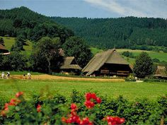 Black Forest/Germany