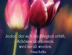Die 15 besten Bilder von Franz Kafka | Sprüche, Zitate und ...