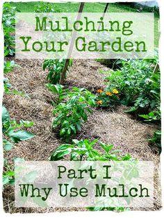 deep mulch gardening, how to use the deep-mulching method in your garden | gardens, Design ideen