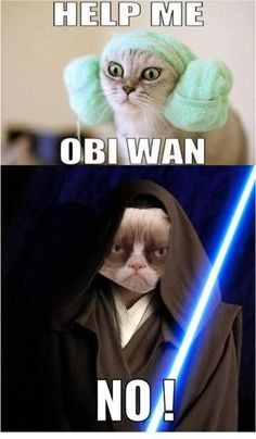 Star Wars meet Angry Cat