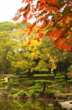Keitakuen Garden is exactly what you would expect from a Japanese garden. Click pin through to post for more amazing ideas for things to do in Osaka.