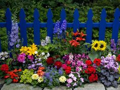 Love this look for future garden plans around the picket fence: Salvias (the purple flower in the photo) are one of the best groups of flowers for honeybees and bumblebees. Description from pinterest.com. I searched for this on bing.com/images