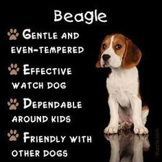 Dogs Breeds - Excellent Advice About Caring For A Canine ** You can find out more details at the link of the image. #DogsBreeds #beagle