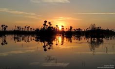 American Wetlands Month in Review: Trouble for the Everglades