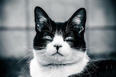 【悲報】うちの猫がデスクで暴れた結果・・・   VICUL (バイカル)