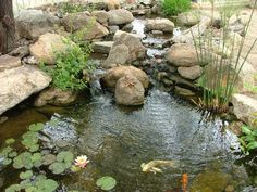 Double waterfall - cool! The waterfall/stream aerates the pond, which is an added benefit for the fish and the plants.