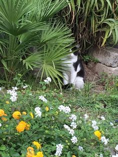 A cat trying to blend in... Sorrento, Italy