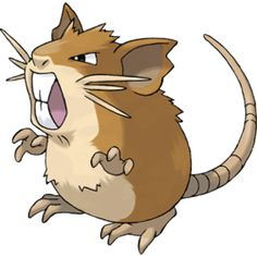 Raticate, the Mouse Pokémon. Raticate is a large, rodent Pokémon. Although it is often depicted on its hind legs, it is a quadruped. It is mostly tawny colored with a cream underside. It has large incisors that grow constantly. These teeth are strong enough to gnaw through steel. There are three whiskers on each side of its face, which it uses to maintain balance. Females will have shorter whiskers and lighter fur. It has webbed feet with three toes that allow it to swim.