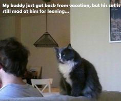 My buddy just got back from vacation, but his cat is still mad at him for leaving...