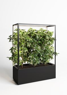 CUBE planted mobil greenwall and room divider to create healthy green spaces with functional light for vital plants and improved air quality in office, restaurant or living room Wooden Garden Planters, Wooden Planter Boxes, Bamboo Plants, Foliage Plants, Diy Plante, Pollo Tropical, Privacy Planter, Flower Shop Decor, Office Dividers