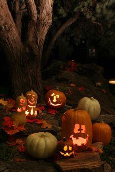 .pumpkins