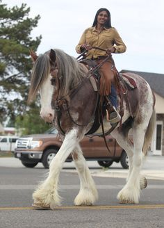 Huge draft working horse with such beautiful coloring. Pretty horse! Sagebrush Days Parade