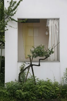 House in a plum grove