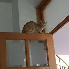 Un gatito en las alturas #ilovemycat #mundogatuno #picoftheday #photooftheday #instacat #kitty #lovecats #cat #catsoninstagram #cats_of_instagram #catoftheday #catstagram