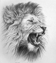 Эскиз рычащего льва
