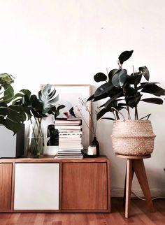 Bring Grün in deine Wohnung! Ein Gummibaum ist super als Zimmerpflanze, da sie gut Sonne, aber auch Halbschatten verträgt.