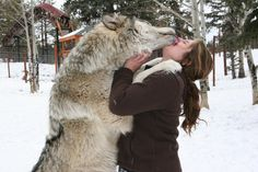 Funny pictures about Wolf kisses. Oh, and cool pics about Wolf kisses. Also, Wolf kisses. Big Wolf, Wolf Love, Wolf Pictures, Animal Pictures, Amazing Pictures, Funny Pictures, Beautiful Creatures, Animals Beautiful, Of Wolf And Man