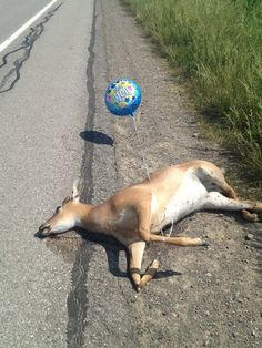 I may need to start carrying get well balloons with me.