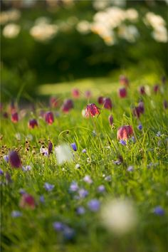 Beautiful garden - purples, blues and whites.   (Image copyright Clive Nichols. All rights reserved.)